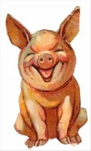 gammel gris